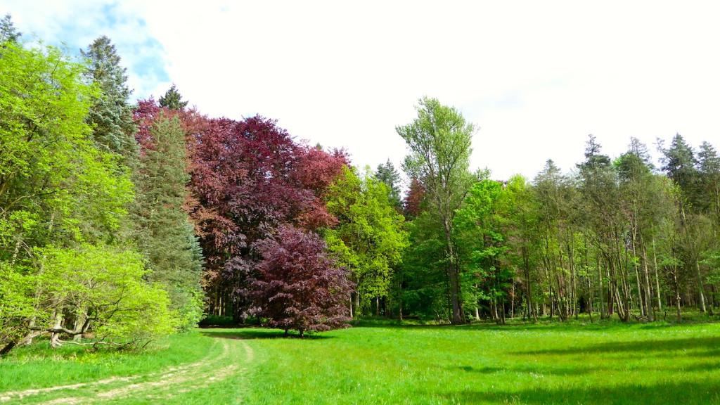 Visite de l'Arboretum royal de Tervuren