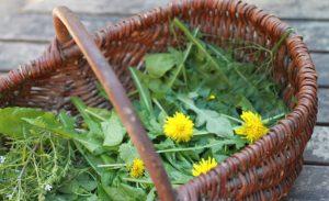 Panier de plantes sauvages comestibles
