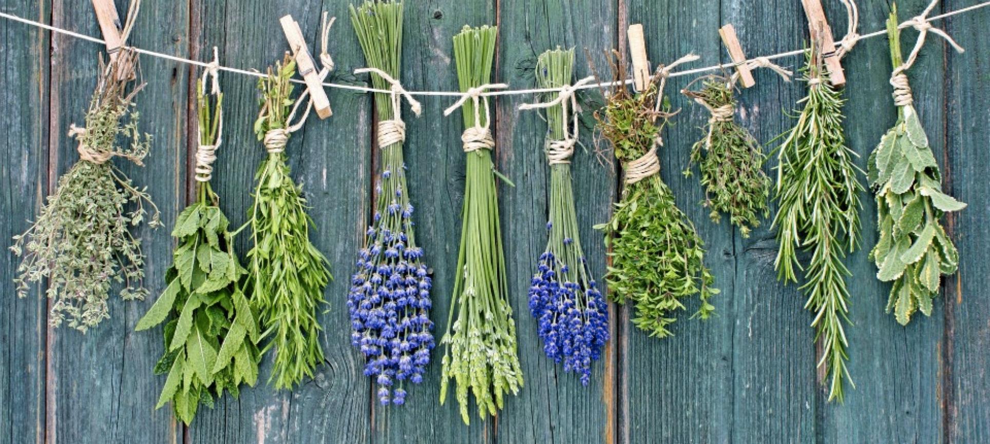 Herbes aromatiques qui sèchent
