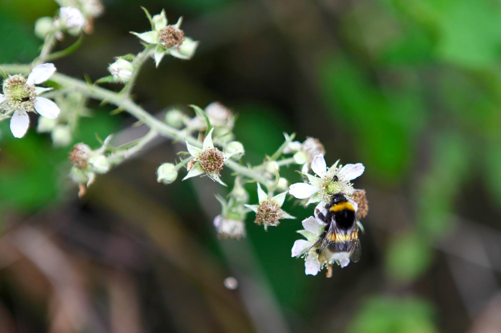 Découverte de la flore comestible dans le bois de Halle
