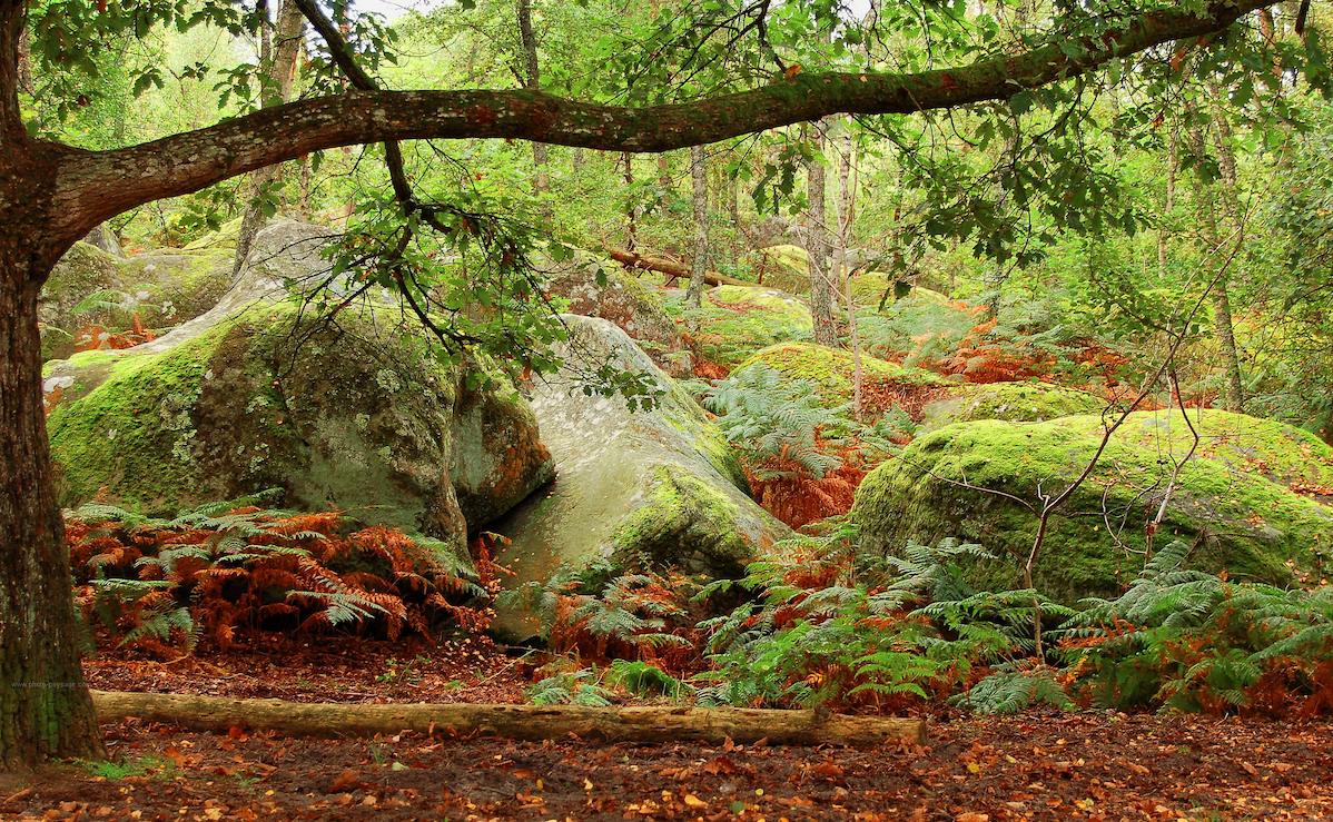 Foret de Fontainebleau en été
