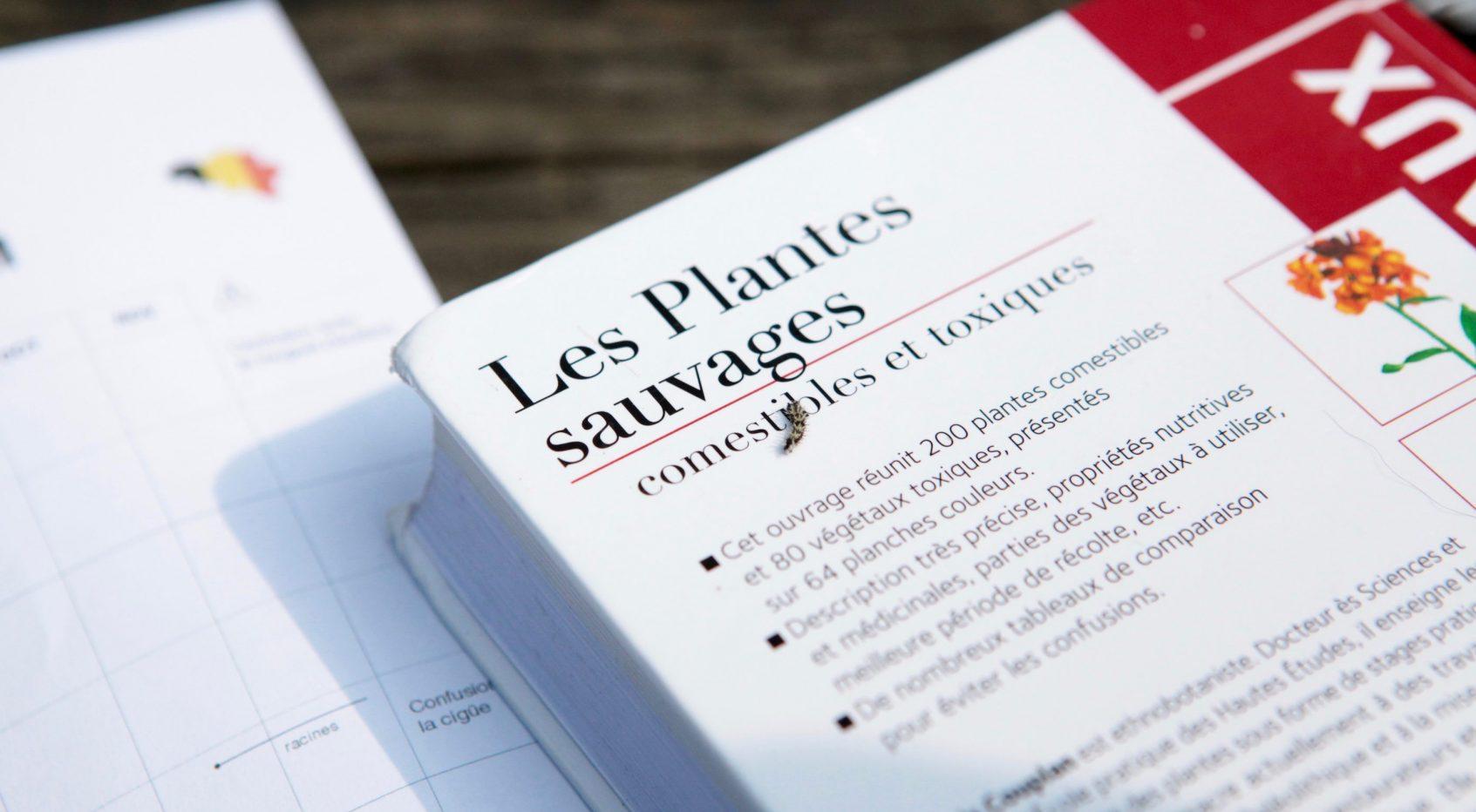 5 livres pour aider à reconnaître les plantes sauvages comestibles