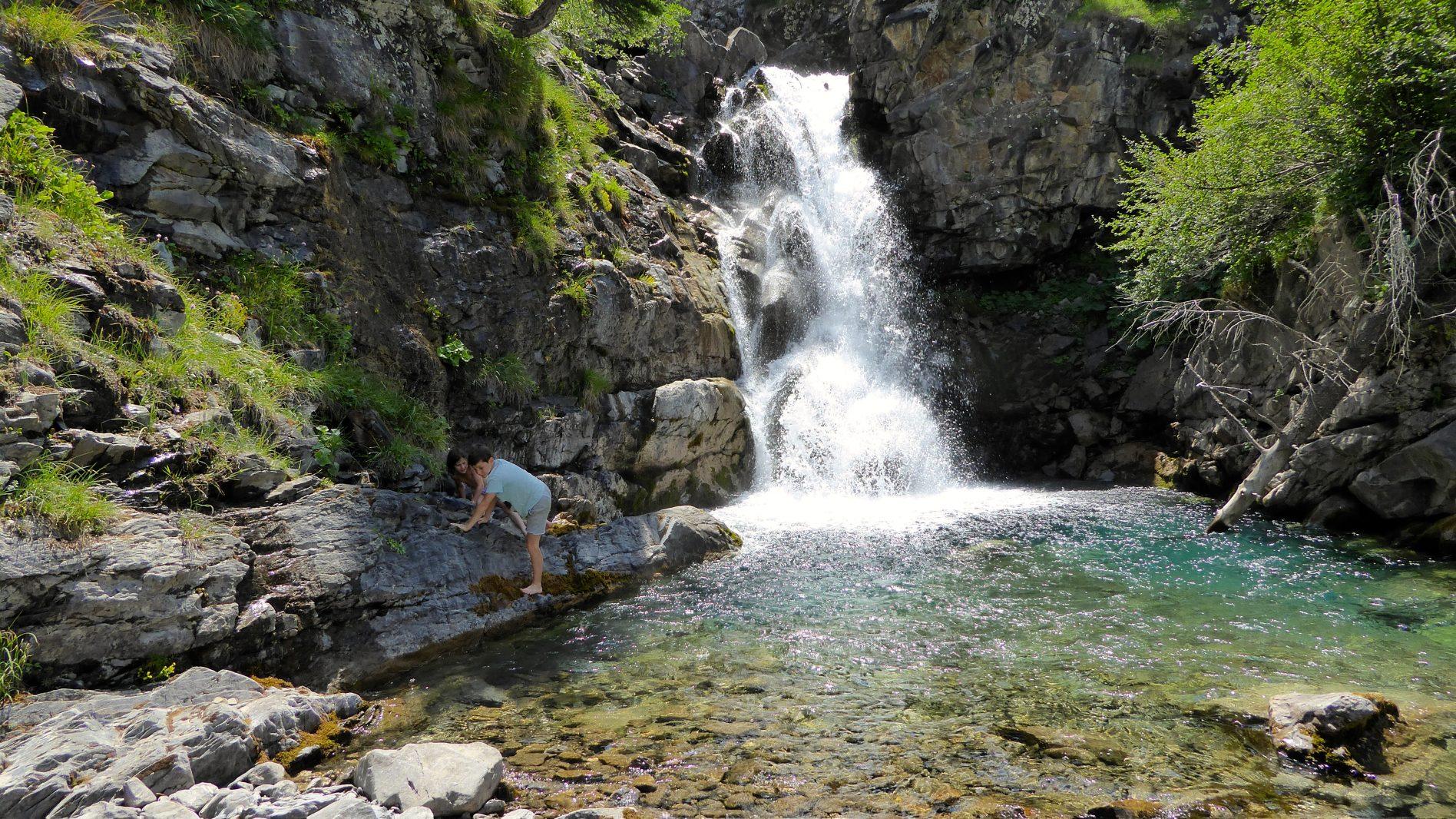 Plantes médicinales des montagnes : mes découvertes de l'été