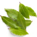 laurier-noble-feuilles