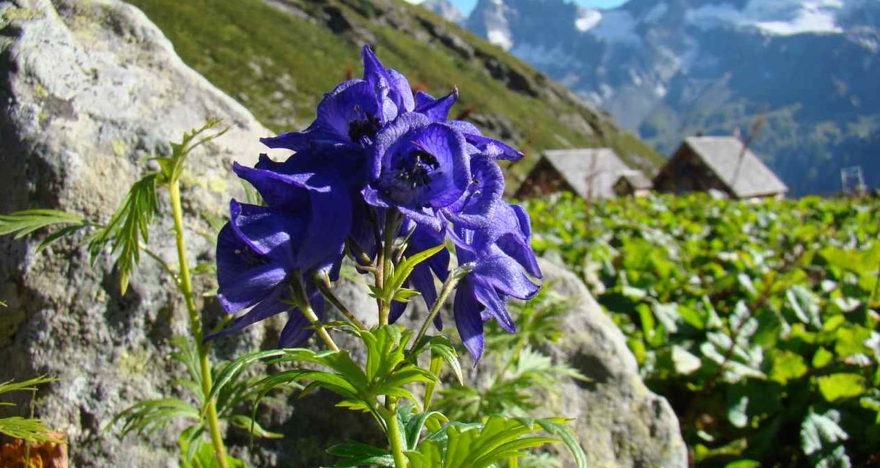 Aromaquiz : quelle est cette fleur ?