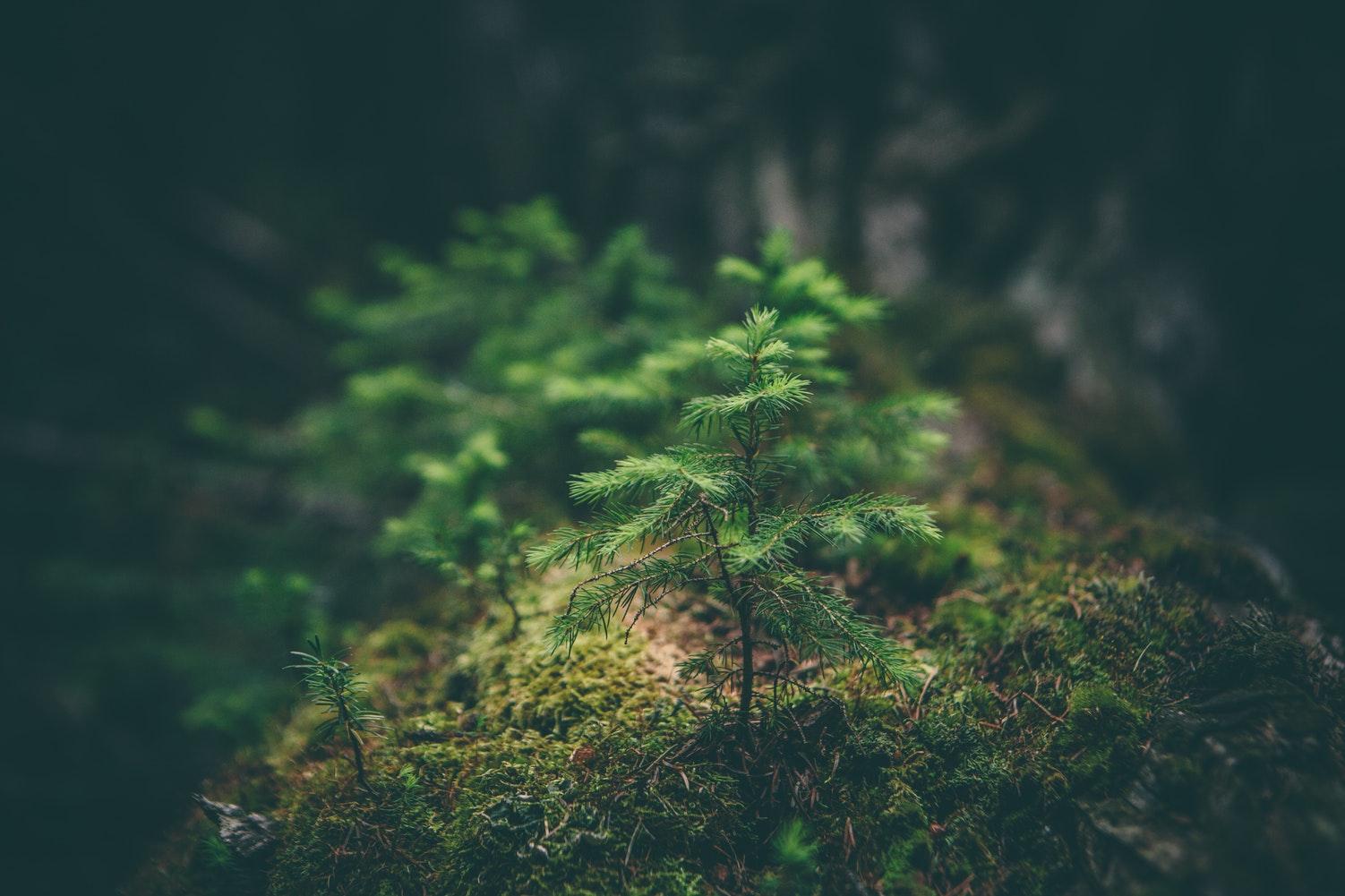 8 faits surprenants sur les arbres