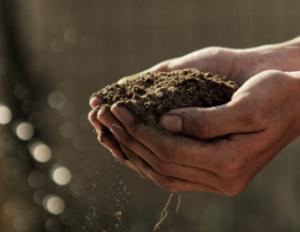 les mains dans le compost