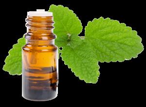 huile essentielle de mélisse