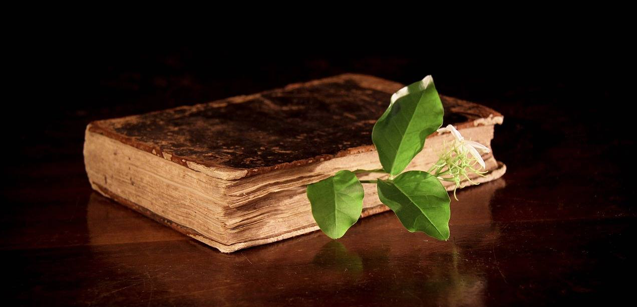 La brève histoire de la médecine par les plantes : une infographie
