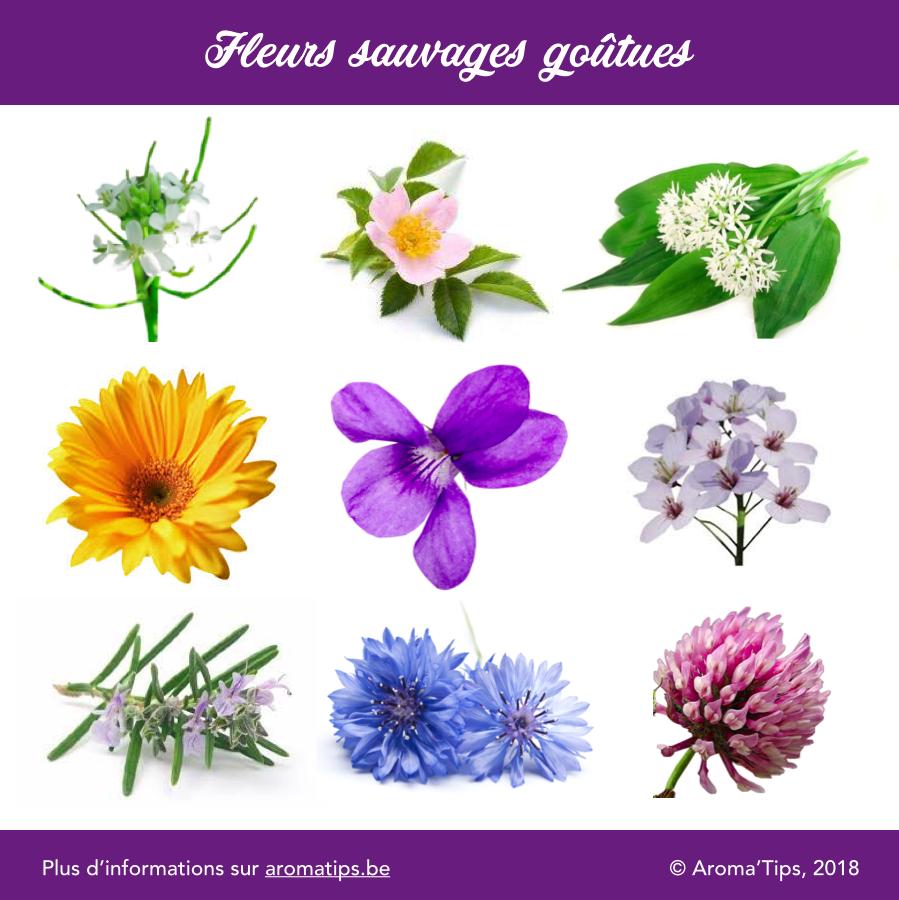fleurs sauvages comestibles qui ont du gout