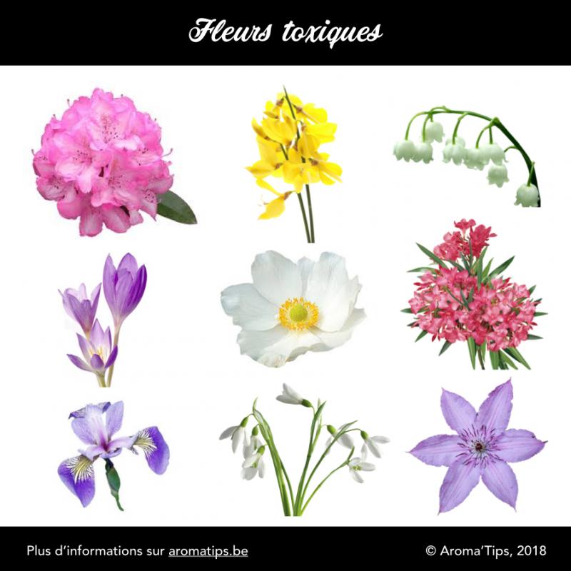 Les fleurs toxiques les plus courantes