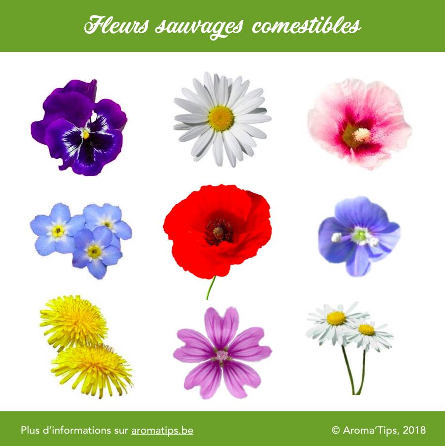 9 fleurs comestibles sauvages