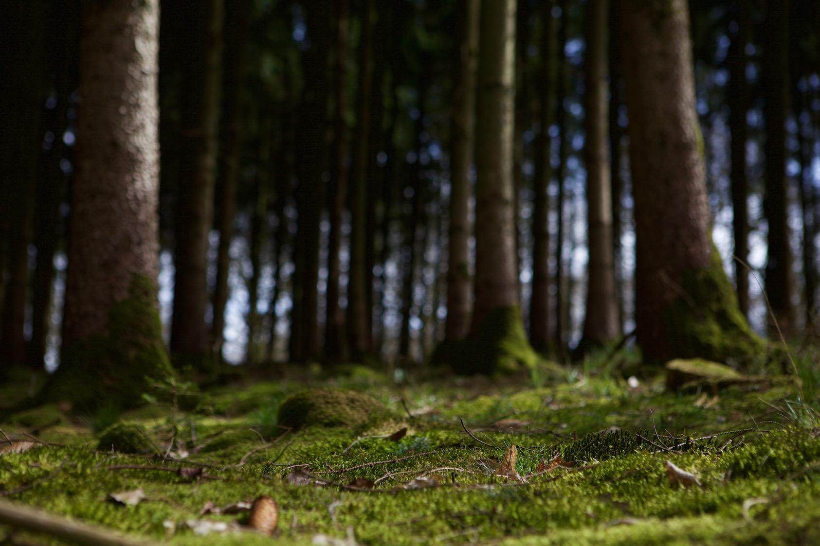 Découverte de la flore printanière comestible des Ardennes en Belgique