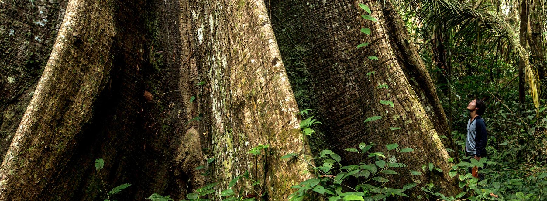 Le livre du mois : Ecoute l'arbre et la feuille, de David G. Haskell