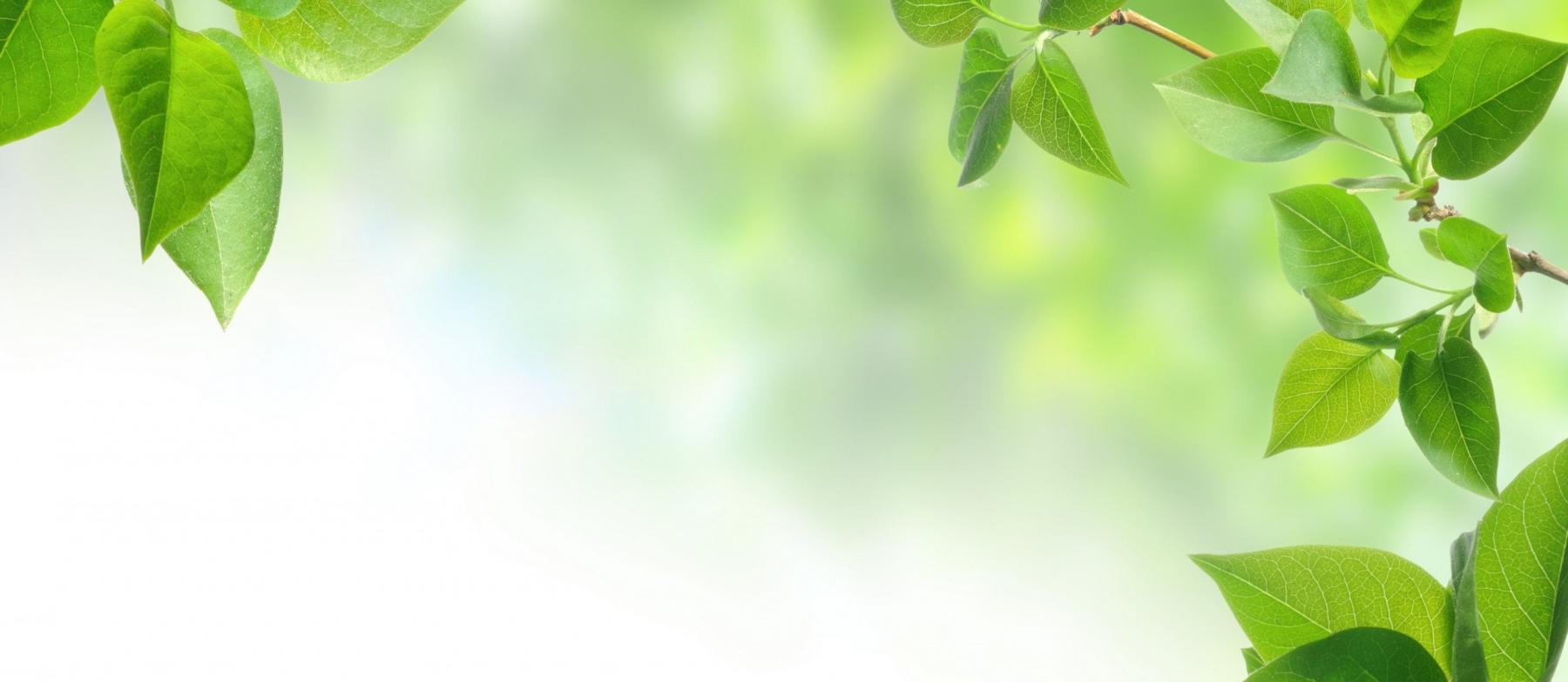 Passion Plantes : une nouvelle série d'entretiens vidéo