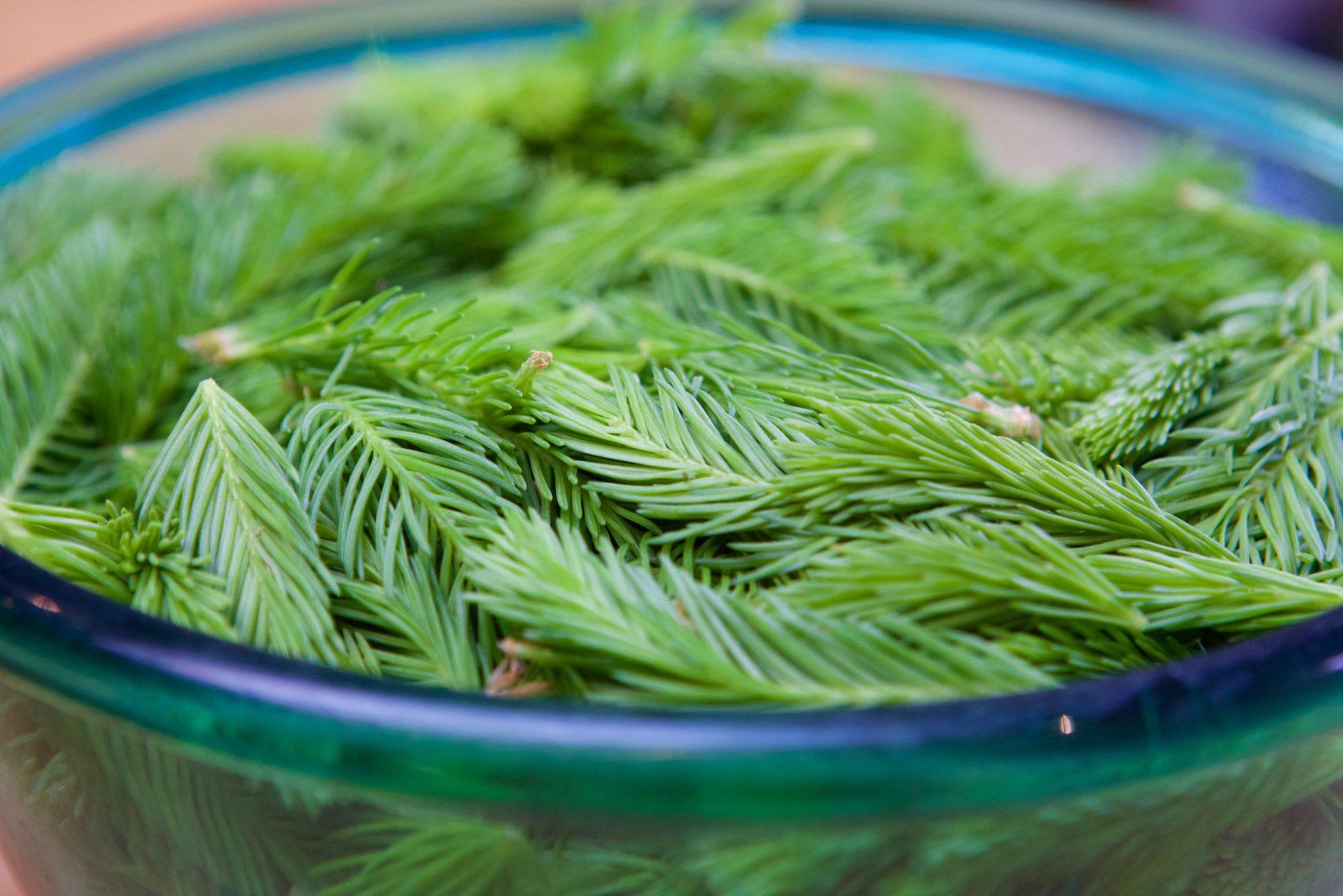 3 recettes de printemps avec les jeunes pousses (ou bourgeons) d'épicéa