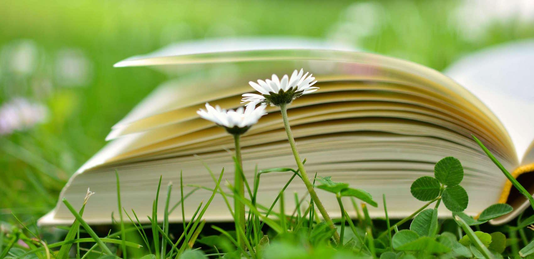 10 livres indispensables pour se reconnecter à la nature différemment