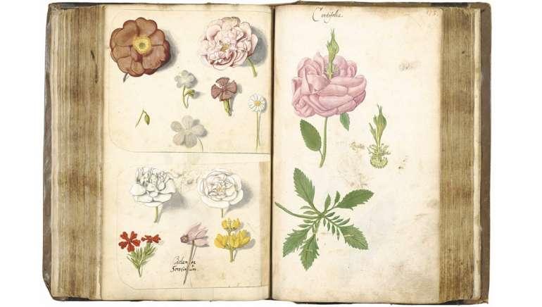 10 livres et sites incontournables pour en savoir plus sur les plantes médicinales