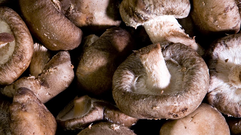 Shitake, un champignon qui booste les défenses immunitaires