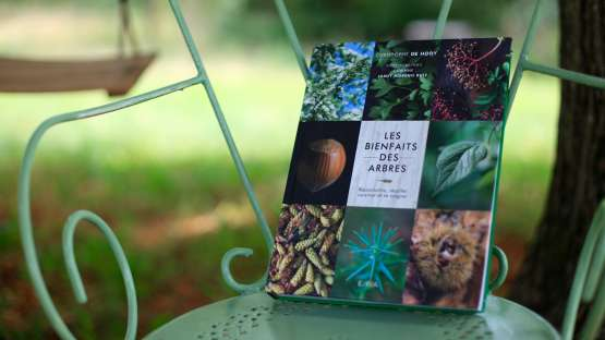 Les bienfaits des arbres : critique de livre