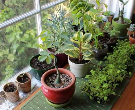 Détoxiquer son corps et son environnement : les plantes et astuces à connaître
