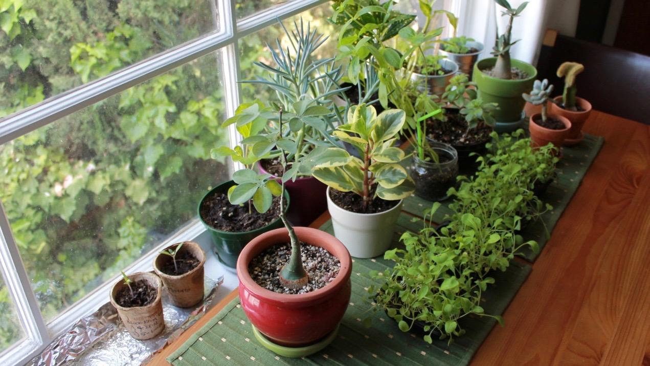 plante detoxifiante pour le corps