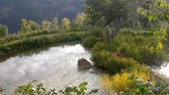 L'eau au coeur de l'agriculture du futur ? La permaculture vue par Sepp Holzer