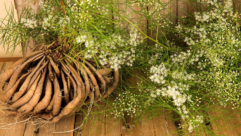 Les plantes de la femme pour accompagner naturellement les cycles hormonaux