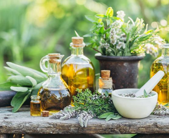 Comment consommer les plantes médicinales ? Les formes galéniques